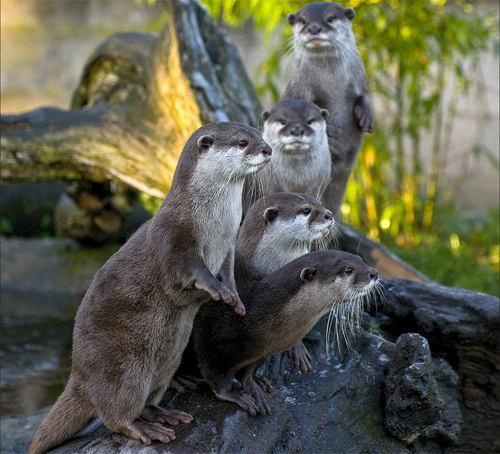 The Otters 0828d