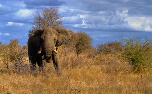 Elephantscape