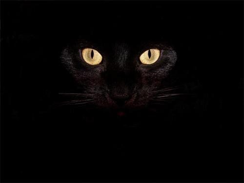 oblivion cat