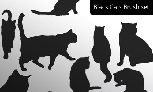 black cat brush set free