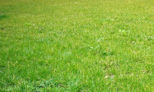Grass five