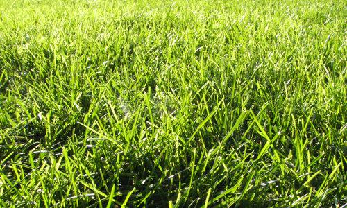 Grass Texture IV