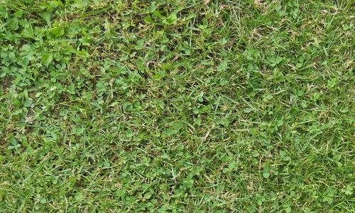 Grass-Texture-19