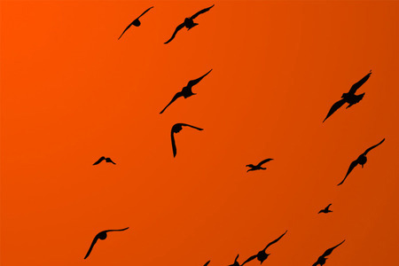 High-res Bird Brushes