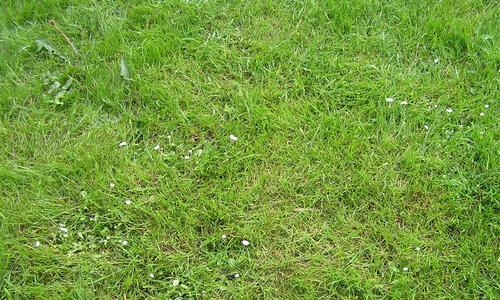 Texture Grass