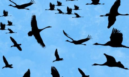 birds photoshop brushes free