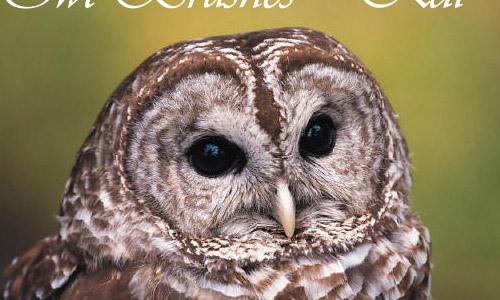 free owl brushes