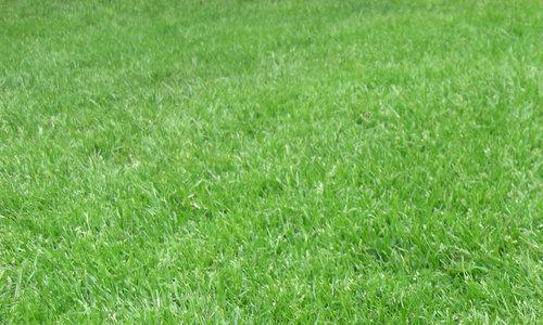 grass 125