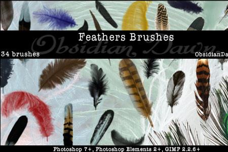 Feathers Photoshop & GIMP Brushes