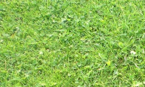 grass 0001