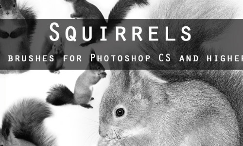 squirrels free photoshop brushes