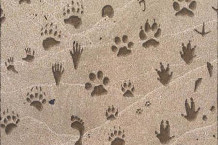GIMP Animal Tracks Brushes