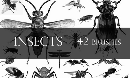 insects free photoshop brushes
