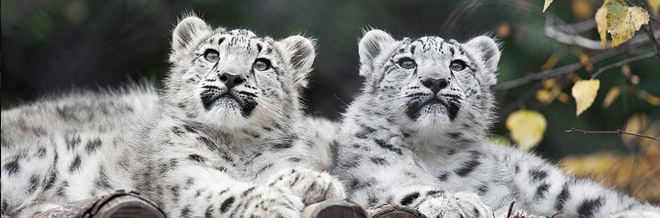 35 Wonderful Photos of Animals Living in the Wild