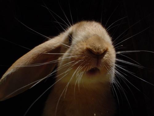 cool rabbit wallpaper
