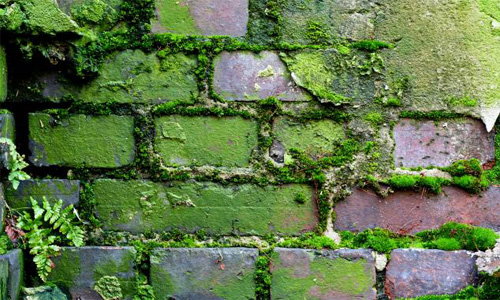 Algae Brick Concrete Grunge Moss Wall
