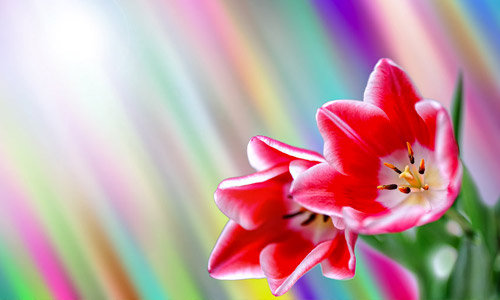colorful spring wallpaper