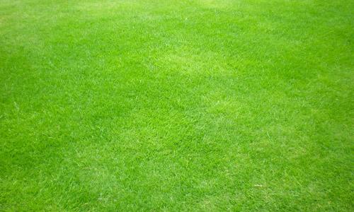 grass texture free