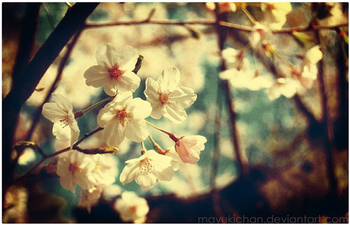amazing vintage spring wallpaper