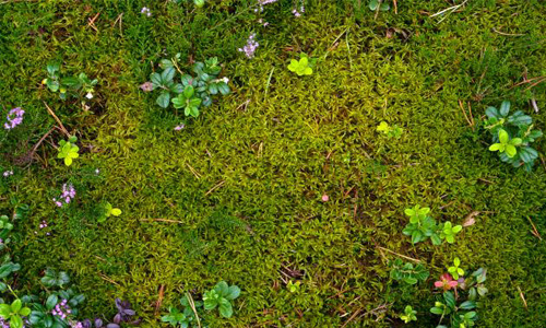Ground Moss Nature Plant