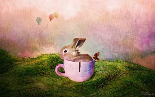 chocolate bunny wallpaper