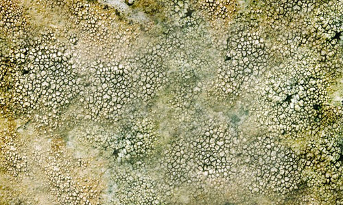 cracked lichen textures