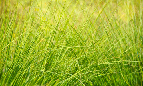 grass high resolution texture