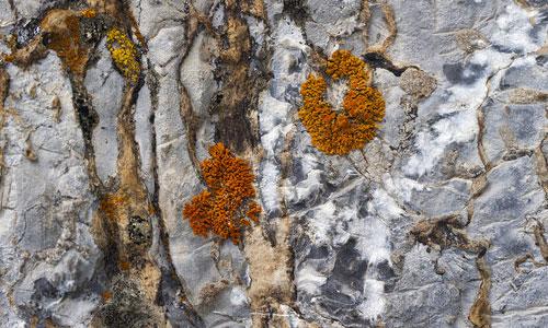 moss orange