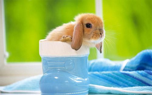 rabbit free wallpaper