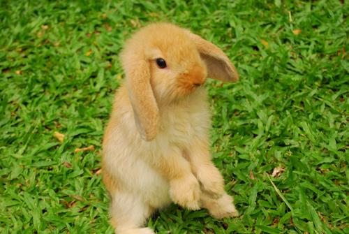 cute quiet rabbits