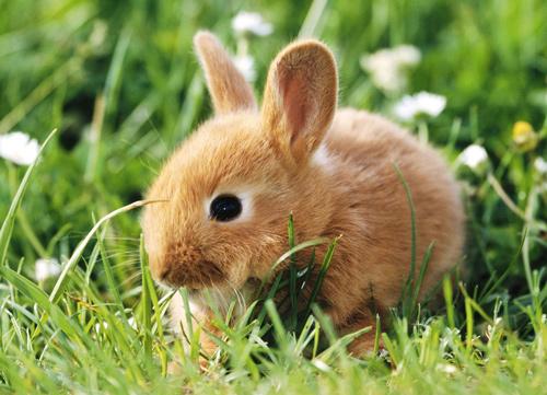 adorable rabbit wallpaper