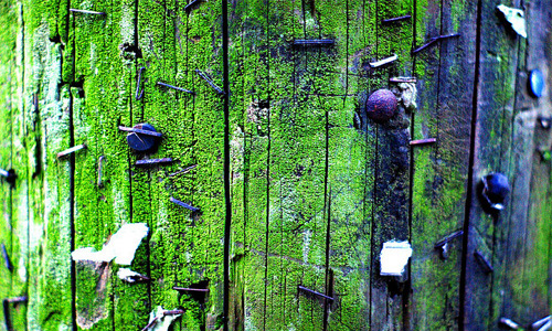 Moss Texture Take 2
