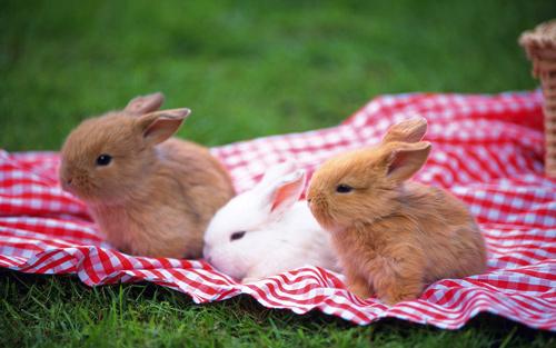 amazingly cute rabbit wallpaper