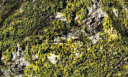 Seamless Mossy Rock Texture 19