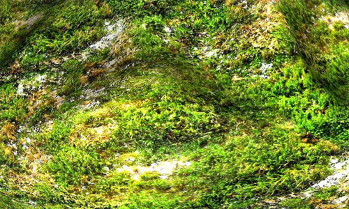 Seamless Mossy Rock Texture 17