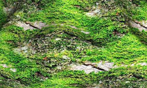 Seamless Mossy Rock Texture 16