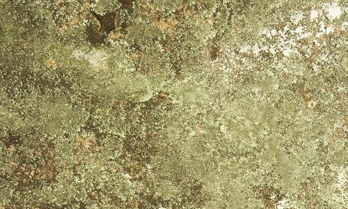 green fungi texture