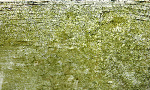 Moss Chipped Wood Fence Texture