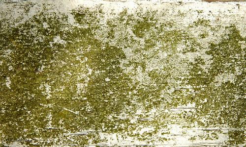 Moss Wood Texture