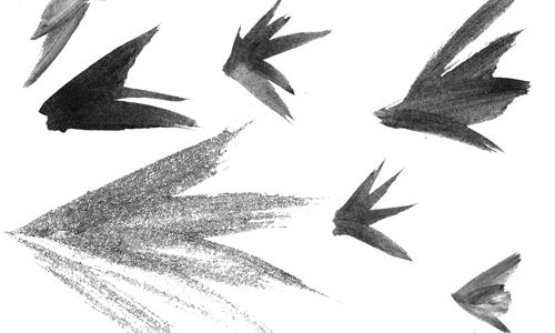 free wing photoshop brush