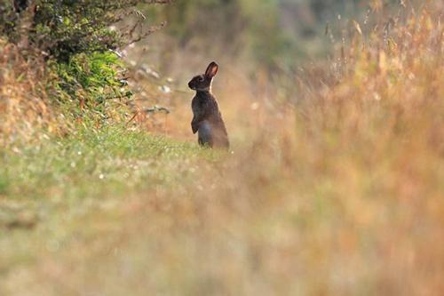 nice rabbit wallpaper