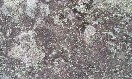 rock texture algae