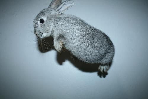 adorable flying rabbit wallpaper