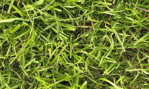 free seamless grass texture