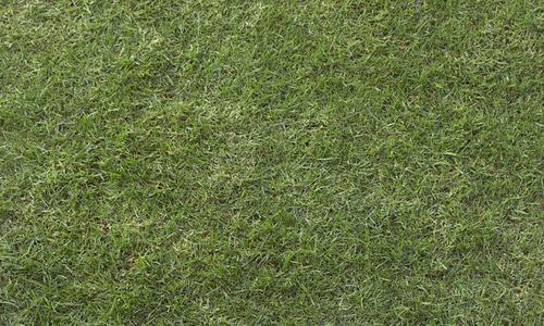 dark grass texture