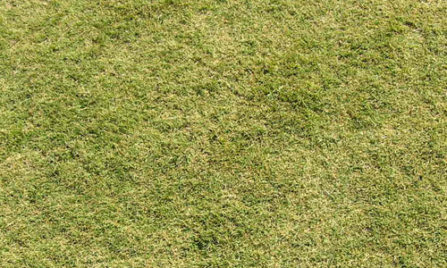 light grass texture
