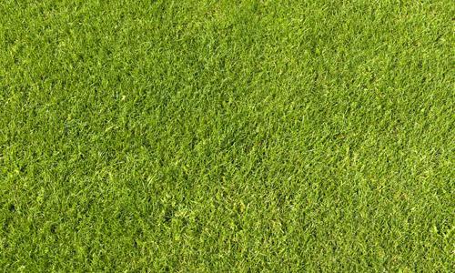 grass texture hd. Perfect Texture Green Grass Texture With Grass Texture Hd Naldz Graphics