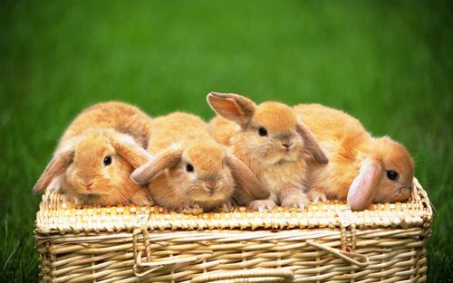 amazing rabbit wallpaper