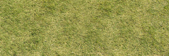 Grass Field Texture To 30 Free High Resolution Grass Textures Naldz Graphics