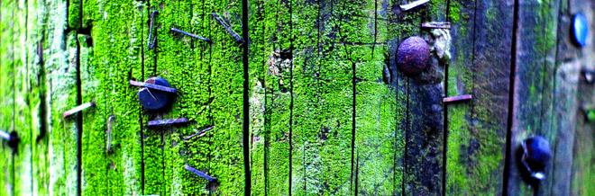 35 Appreciable Lichen and Moss Textures